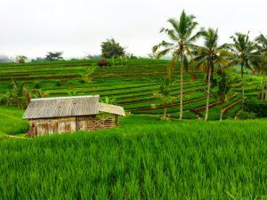 Indonesie 1536 – kopie