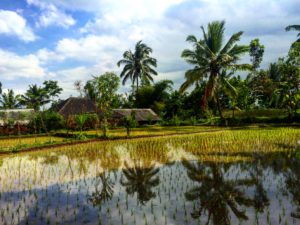 Indonesie 809 – kopie