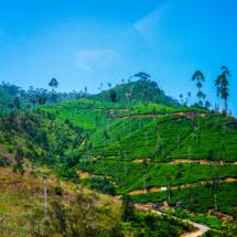 srilanka-1040