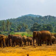 srilanka-673